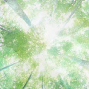 自然素材リフォーム